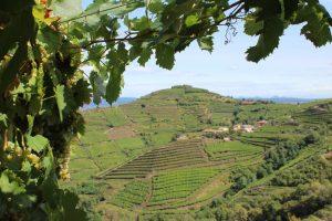La situazione dell'agricoltura italiana di Nicola Chiaranda